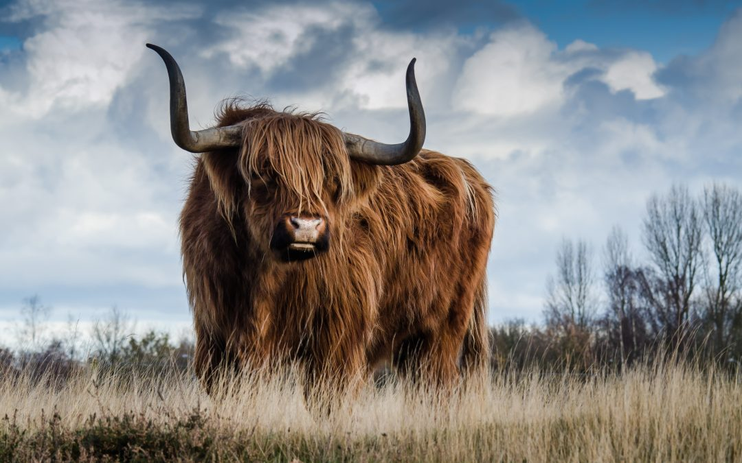 Taking the bull by the horns – building resilience in UK farming